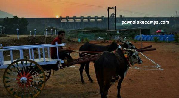 Bull-Cart at Pawna Camping.